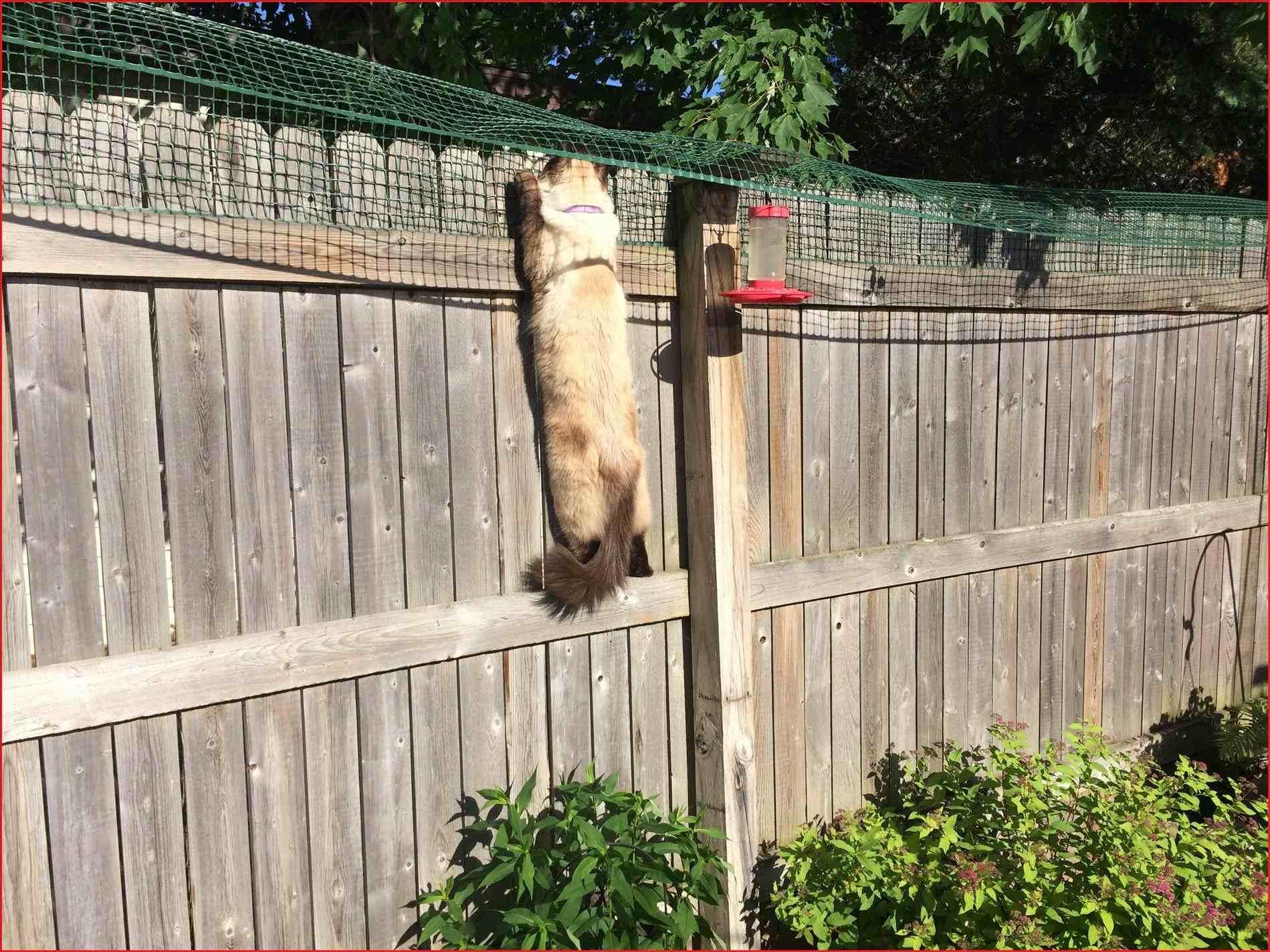 Гоним кота: как заставить котов не справлять нужду на лужайке у дома? - 1