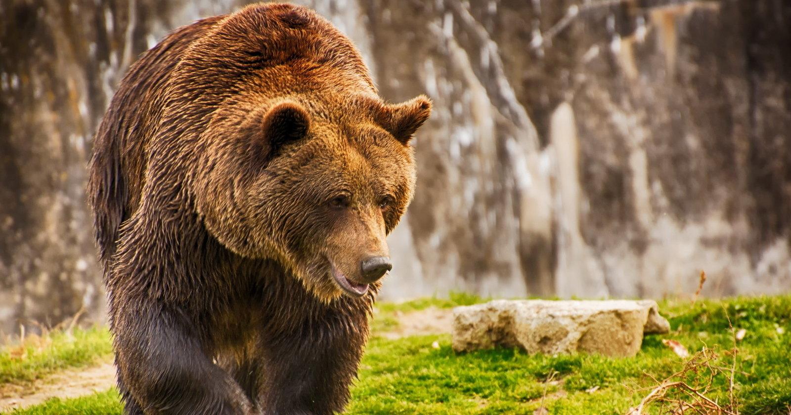 В Приморье открылся приют для медведей