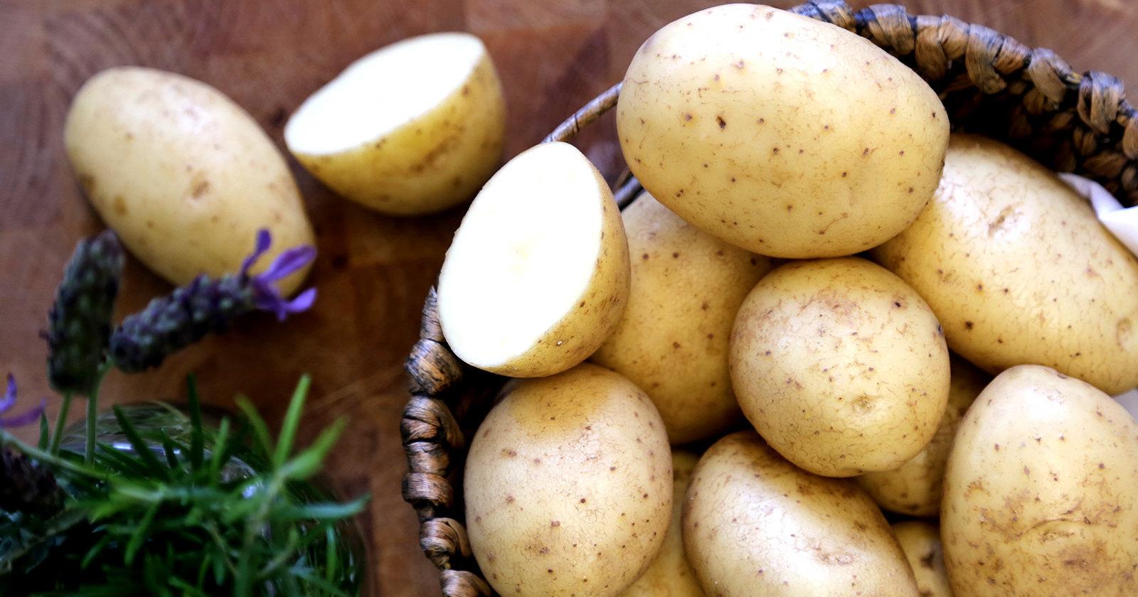 Найден способ борьбы с гнилым картофелем