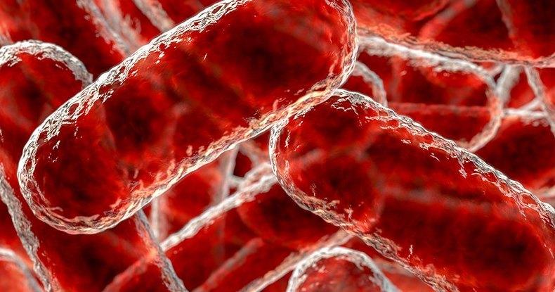 Плотоядные бактерии научились работать парами