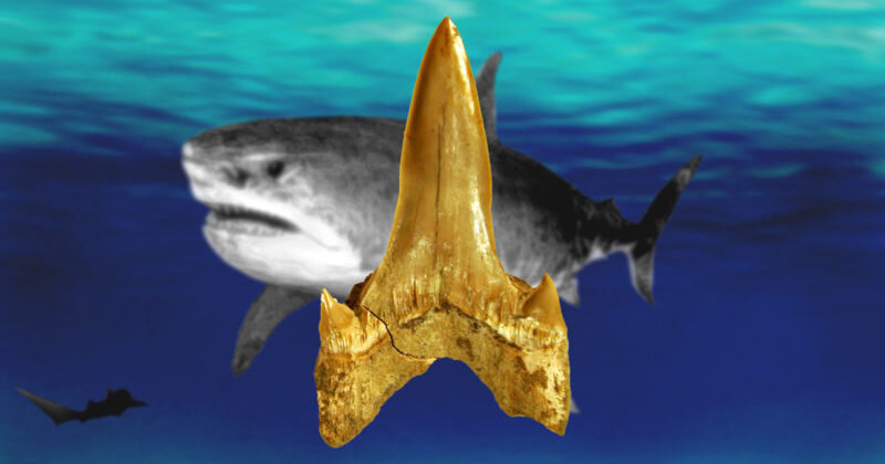 Описан новый вид доисторических акул