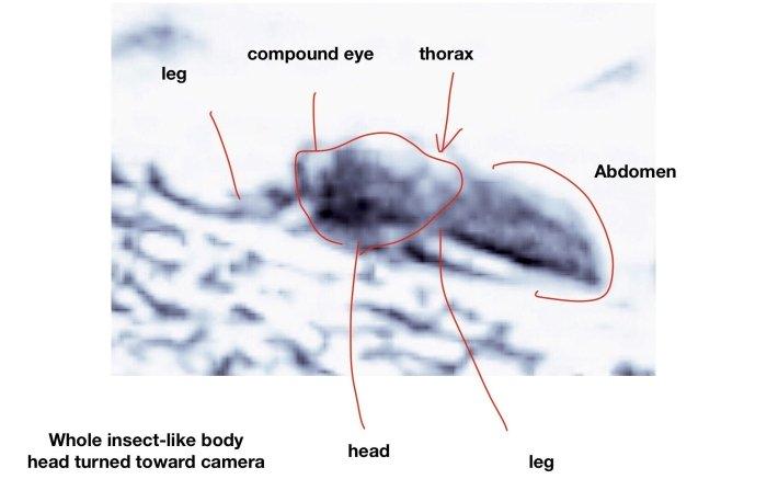 Ученый разглядел на фотографиях марсохода огромных жуков