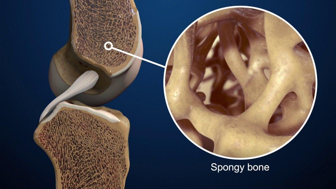 Микроархитектура костей как основа для сверхлегких и долговечных материалов - 1