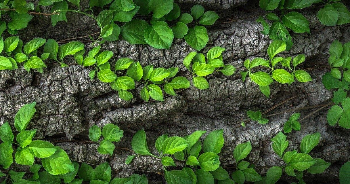 «Флороучет»: почему люди охотятся со смартфонами за растениями