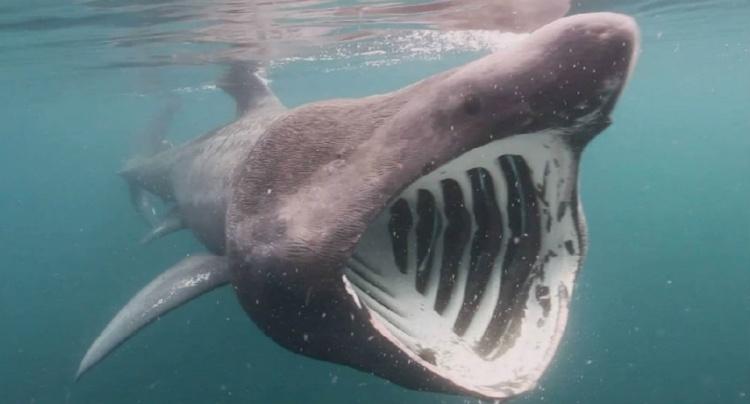 Учёные предлагают использовать животных для мониторинга океанов
