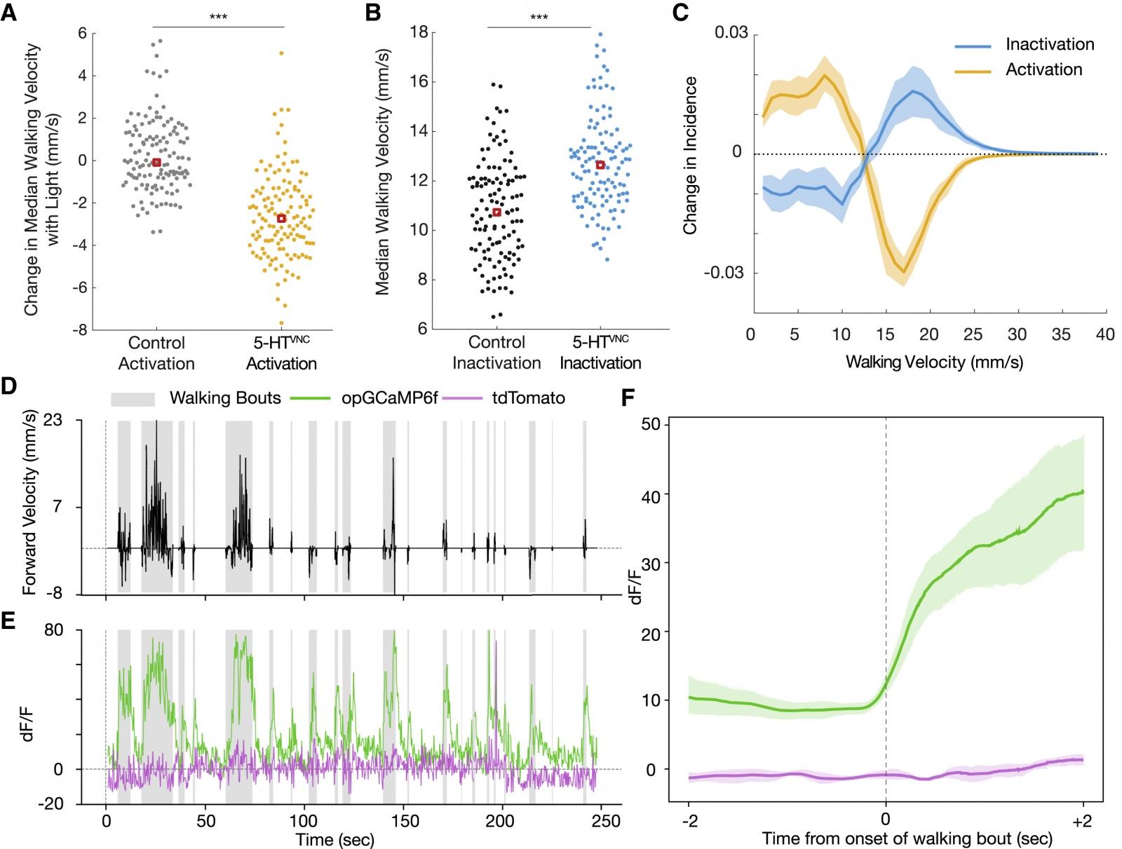 Почему мы цепенеем от страха: влияние серотонина на локомоцию - 5