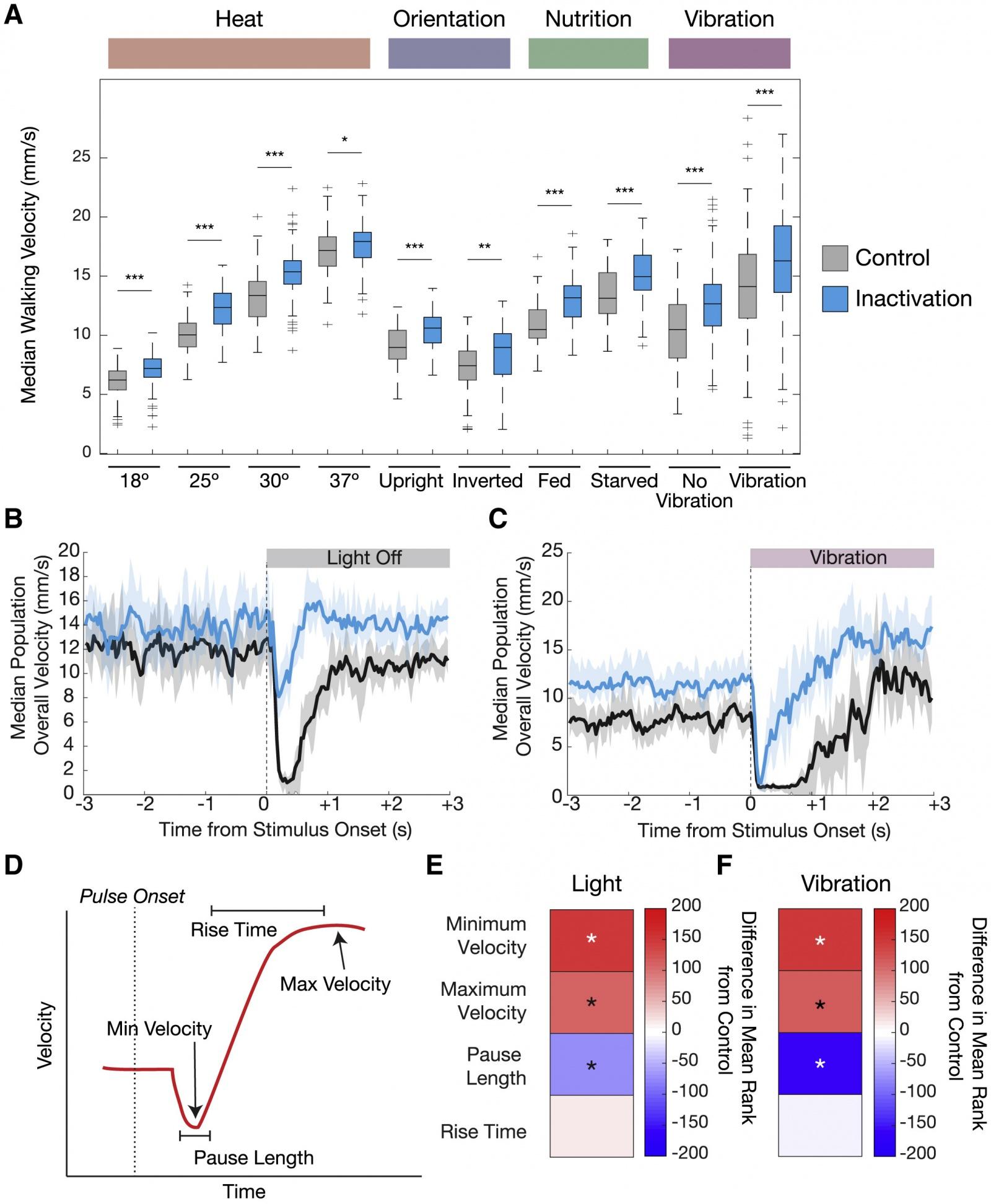 Почему мы цепенеем от страха: влияние серотонина на локомоцию - 8
