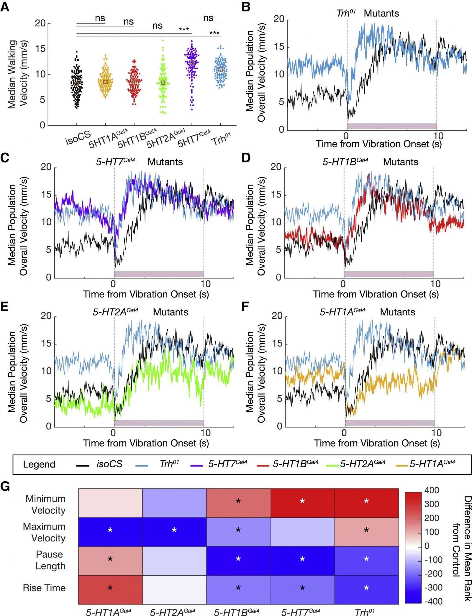 Почему мы цепенеем от страха: влияние серотонина на локомоцию - 9