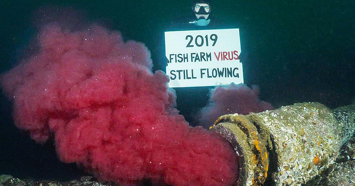 Зараженные вирусом потроха рыб два года сбрасывали в океан