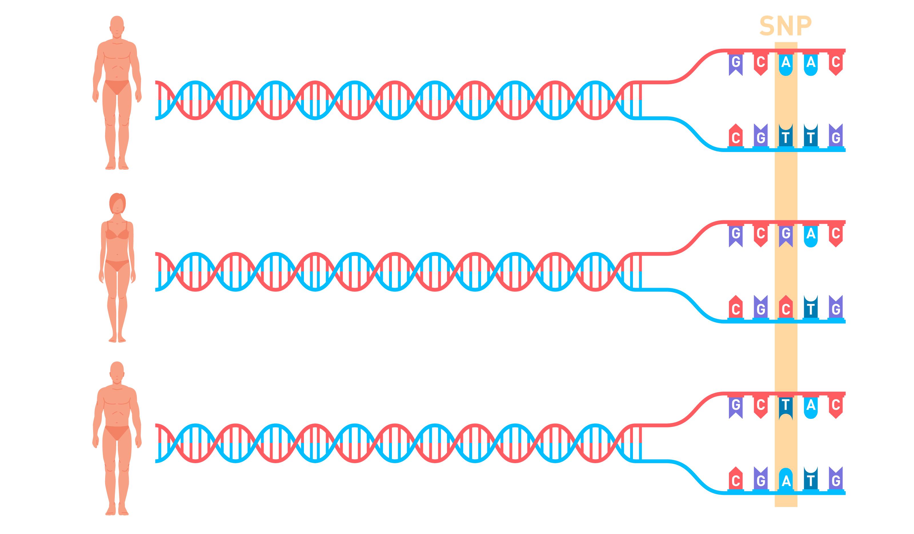Что такое Полный геном и зачем он нужен - 2