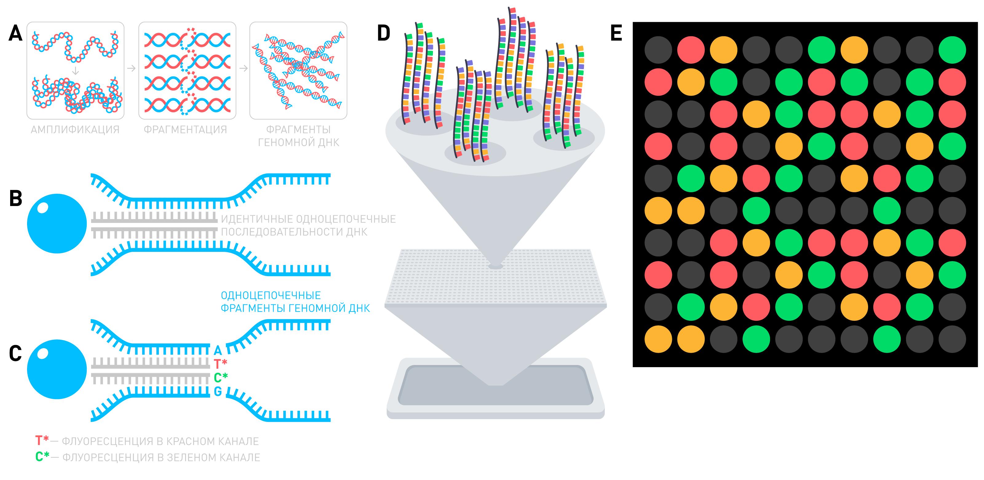 Что такое Полный геном и зачем он нужен - 3