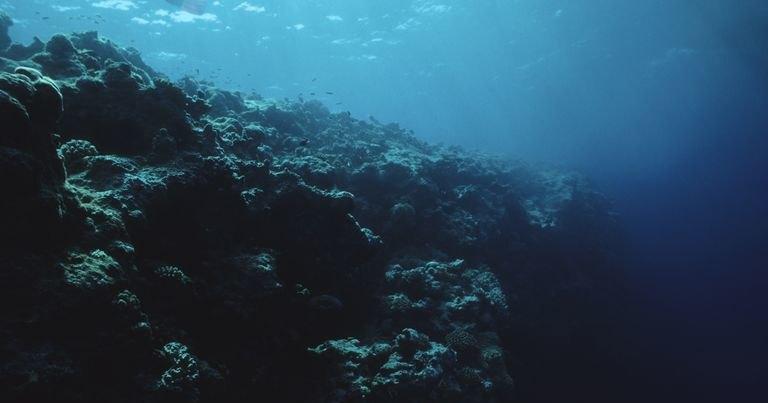 Откуда в океане мертвые зоны и чем они опасны для нас с вами