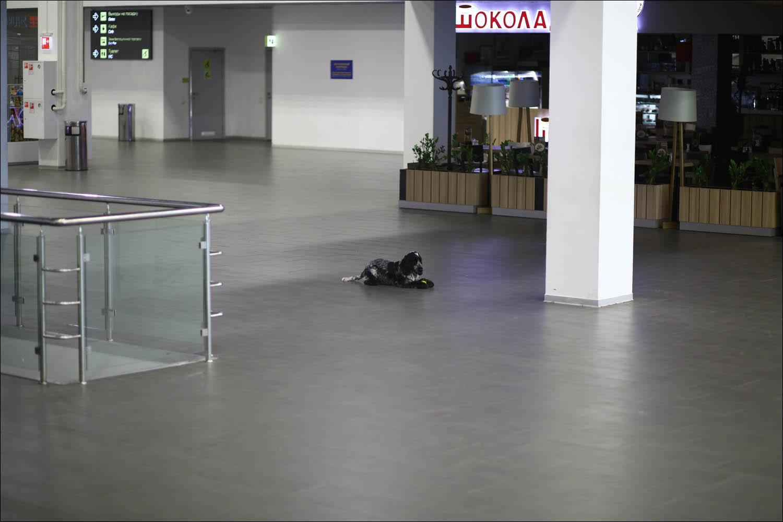 Кинологическая служба аэропорта: вас уже обнюхали - 5
