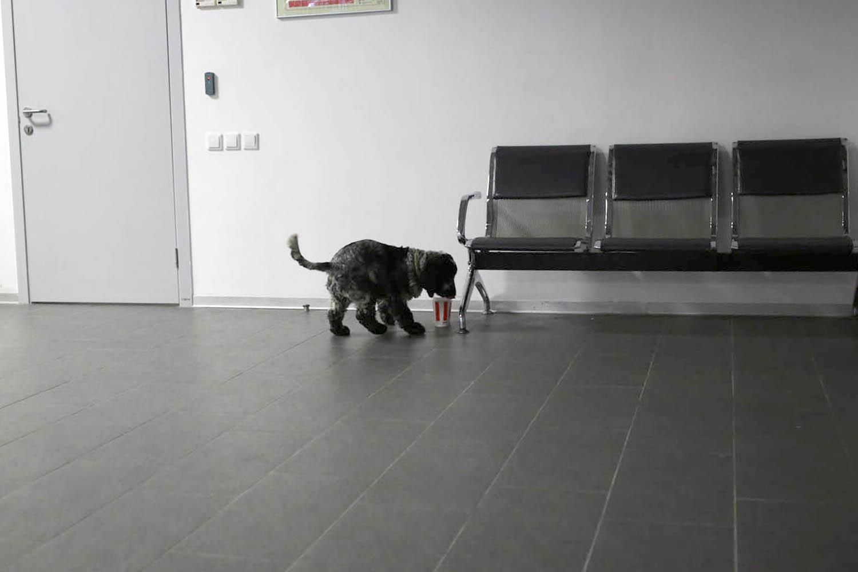 Кинологическая служба аэропорта: вас уже обнюхали - 7