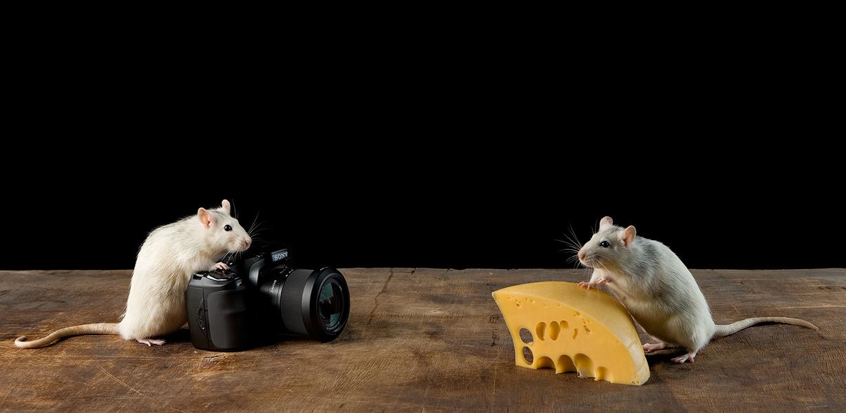 Поговорим о… сыре? - 1
