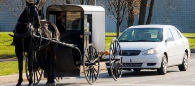 Гужевой транспорт 21 века - 6