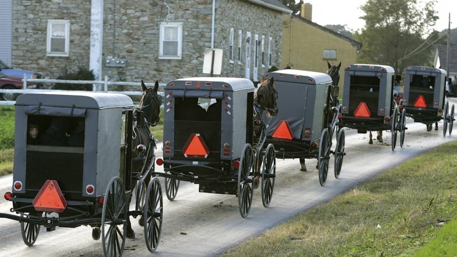 Гужевой транспорт 21 века - 7