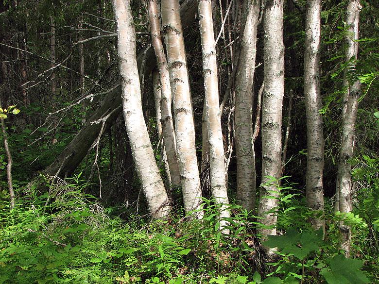Увидеть лес за деревьями - 1