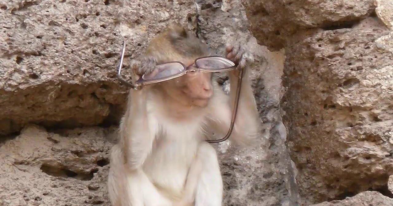 Мартышка и очки: обезьяна напала на делавшего селфи туриста
