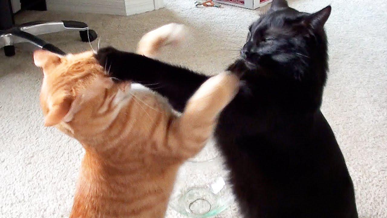 Дж. Х. Рейнвотер «Как пасти котов»: не надо так, или негативные паттерны в руководсте - 1