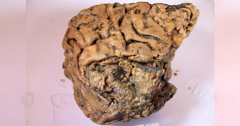 Загадочный мозг сохранился, пролежав в земле тысячи лет