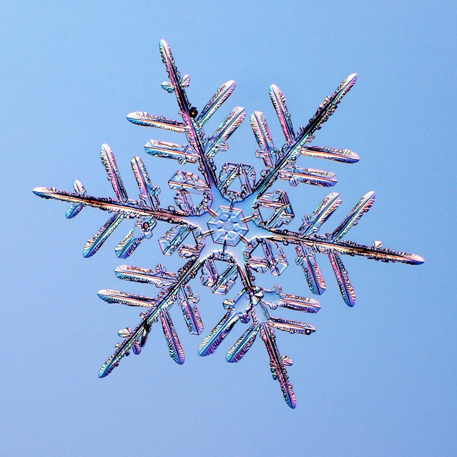 Великая теория снежинок - 3