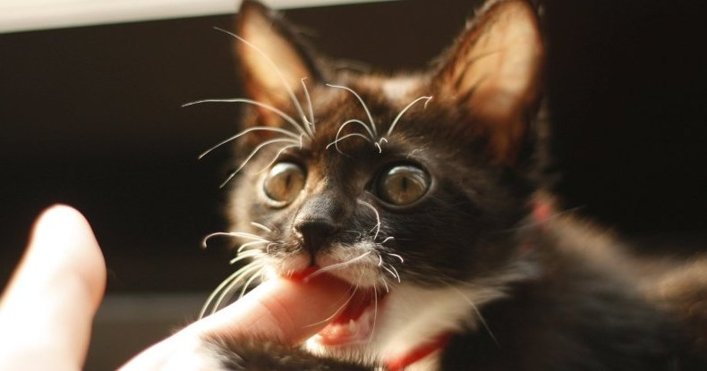 Дикие кошки с удовольствием поедают человечину: неожиданное открытие