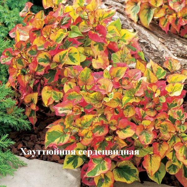 Нет клещам! Растения против переносчиков болезни Лайма - 3