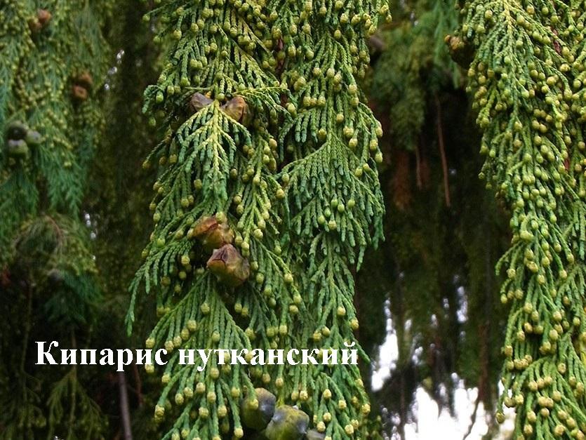 Нет клещам! Растения против переносчиков болезни Лайма - 4