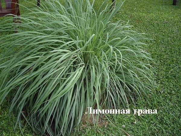 Нет клещам! Растения против переносчиков болезни Лайма - 5