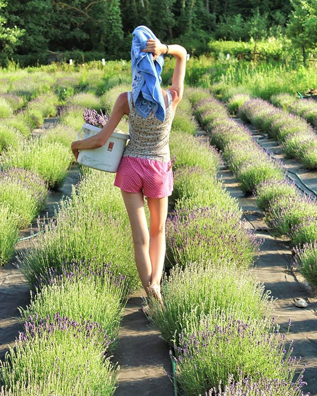 Нет клещам! Растения против переносчиков болезни Лайма - 7