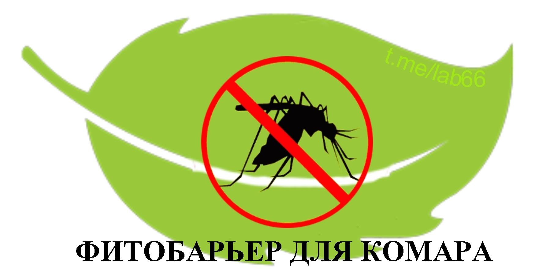 Нет комарам! Обзор антимоскитных «фитобоеприпасов» - 1