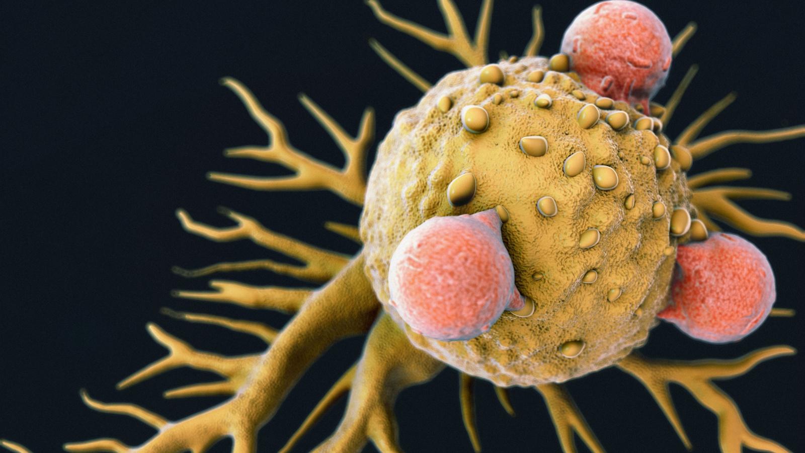 Учёные нашли T-клетки, открывающие перспективы универсальной противораковой иммунной терапии - 2