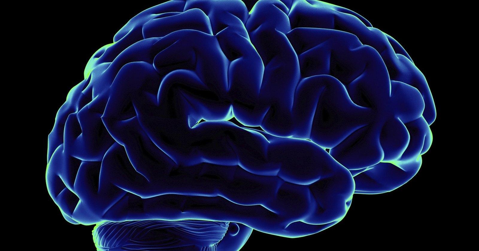 Прояснено влияние мозга на иммунитет