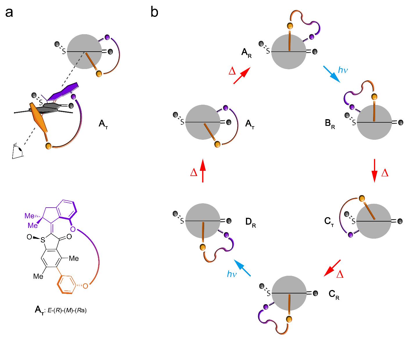 Синхронное фуэте: биологические моторы в нанотехнологиях - 6