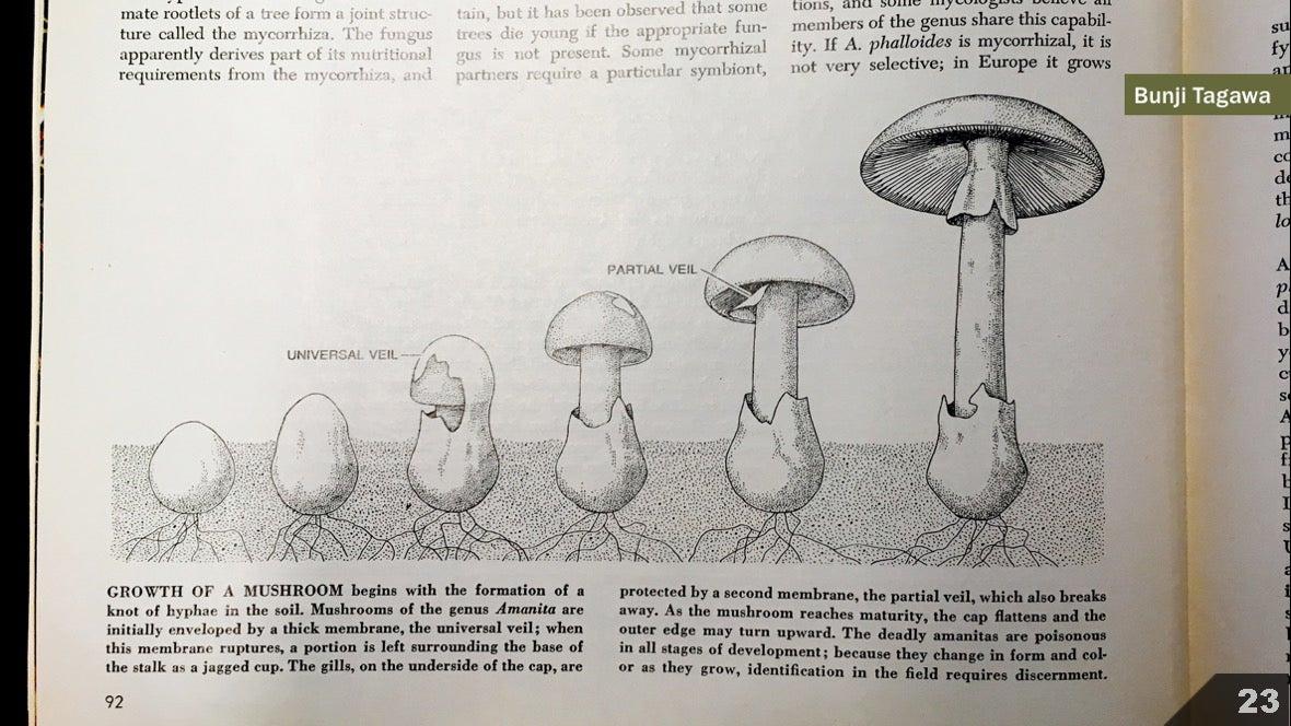 Визуализация науки: иллюстрации и инфографика - 24