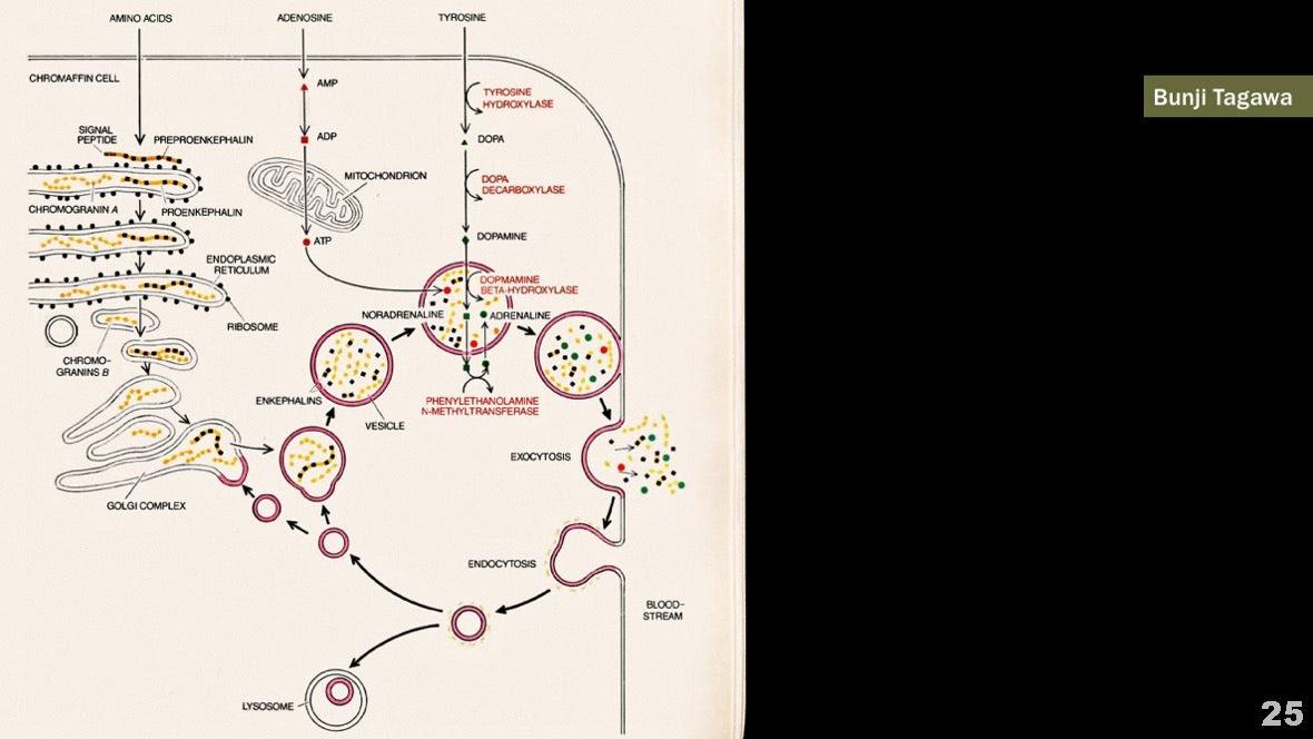 Визуализация науки: иллюстрации и инфографика - 26
