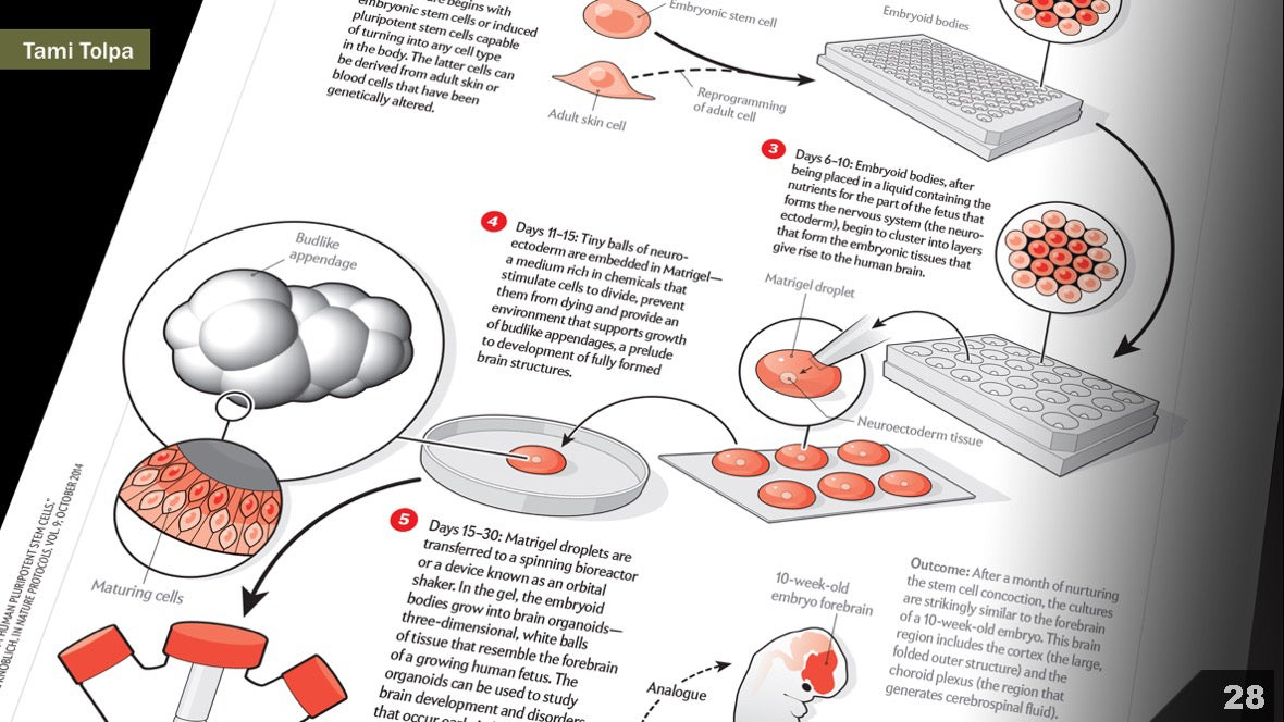 Визуализация науки: иллюстрации и инфографика - 29