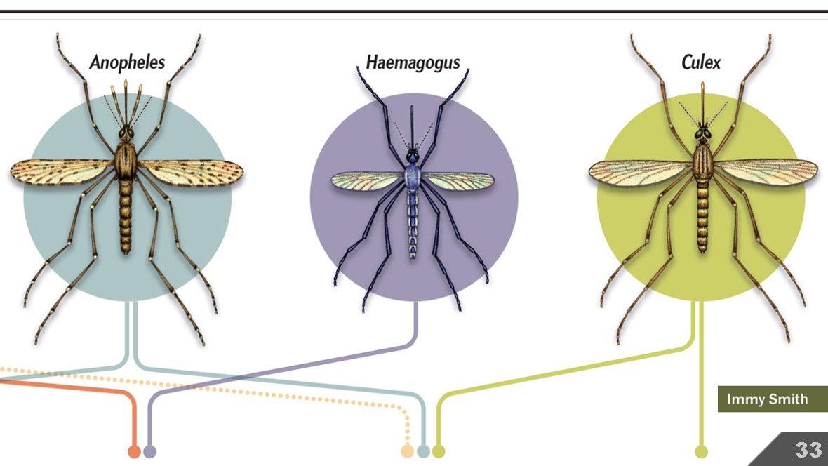 Визуализация науки: иллюстрации и инфографика - 37