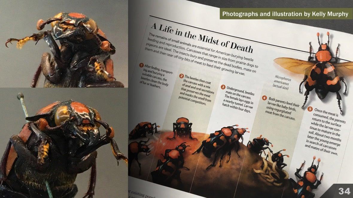 Визуализация науки: иллюстрации и инфографика - 38