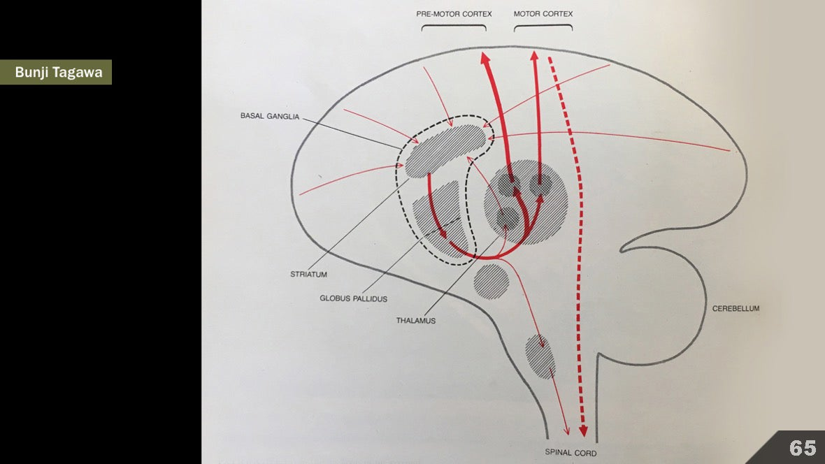 Визуализация науки: иллюстрации и инфографика - 77