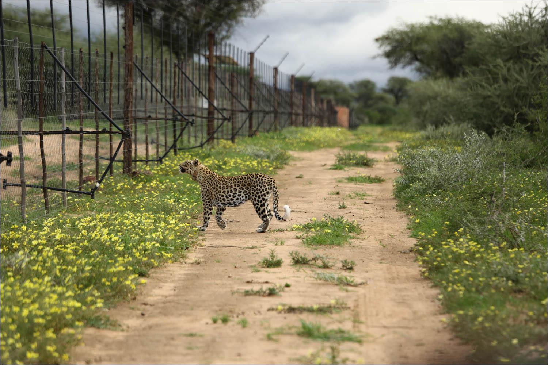Как в Намибии защищают диких животных + IoT-ошейники - 2