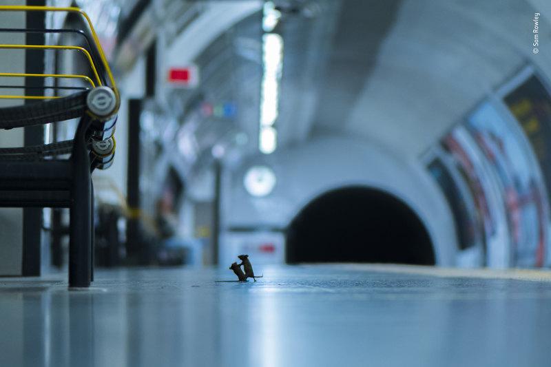 Дерущиеся мыши победили в конкурсе фотографии