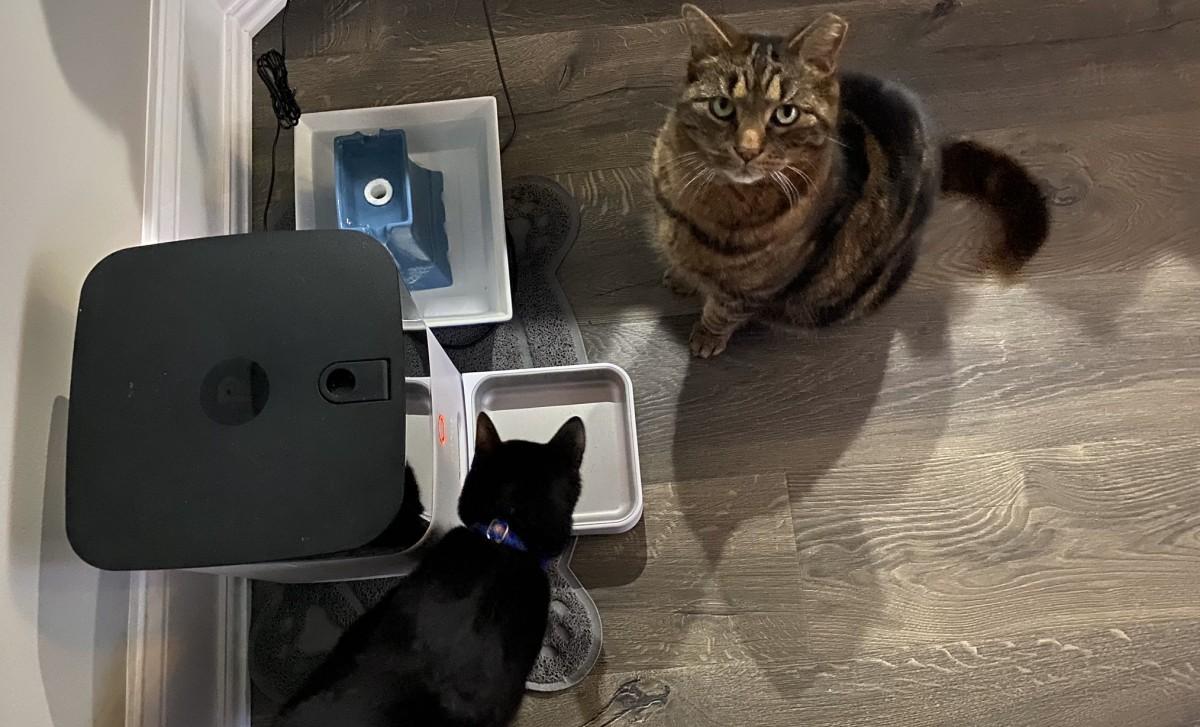 Из-за неполадок на серверах компании Petnet кормушки SmartFeeder перестали давать еду домашним питомцам по расписанию - 1