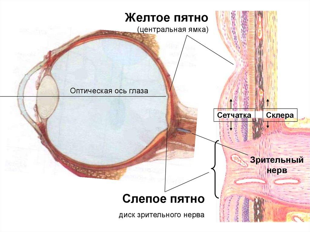 Глаза, мозг, качество видео: размышления о 120fps, 8K, HDR, палочках, колбочках и «эффекте мыльной оперы» - 2