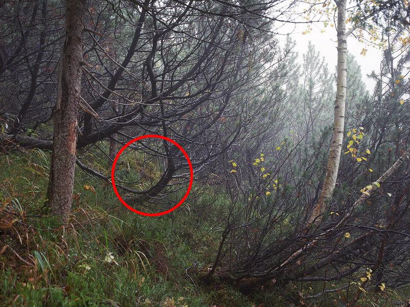 Немецкий фотограф предложил поискать снайперов