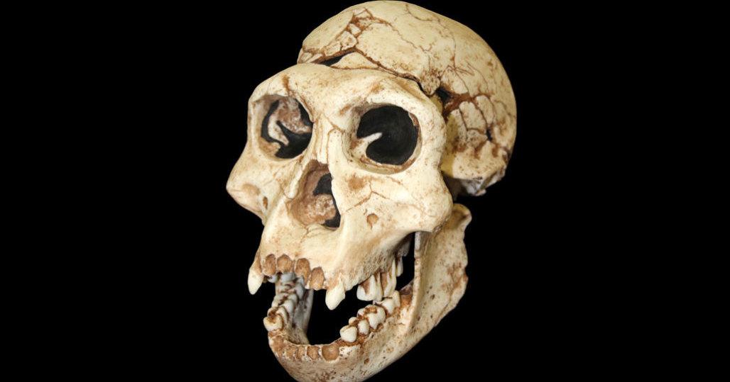 Ученые нашли новый неизвестный вид древнего человека