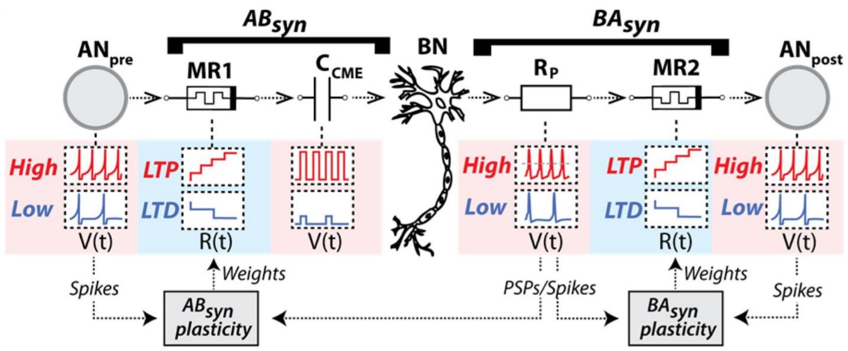 Живые и искусственные нейроны связали через интернет - 3