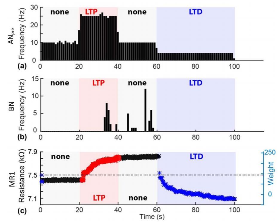 Живые и искусственные нейроны связали через интернет - 4