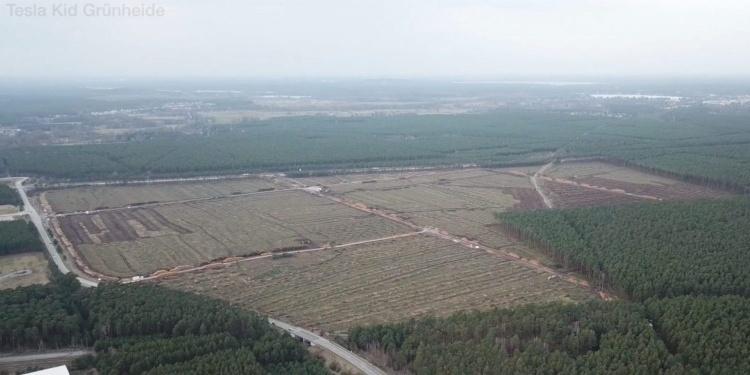 Леса больше нет — Tesla завершила первый этап по вырубке деревьев под Гигафабрику в Германии
